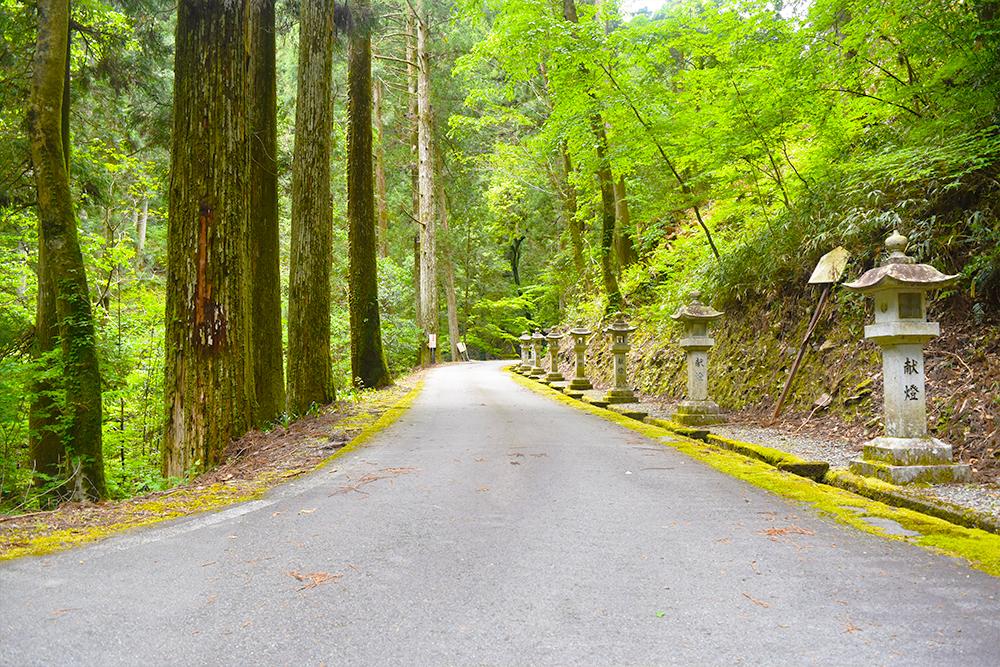 森林(遊歩道)