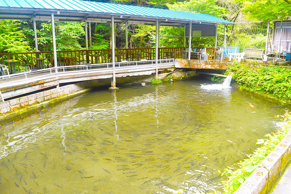 釜ヶ滝マス園